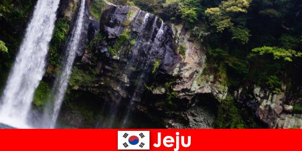 Jeju in Zuid-Korea, het subtropische vulkanische eiland met adembenemende bossen voor buitenlanders